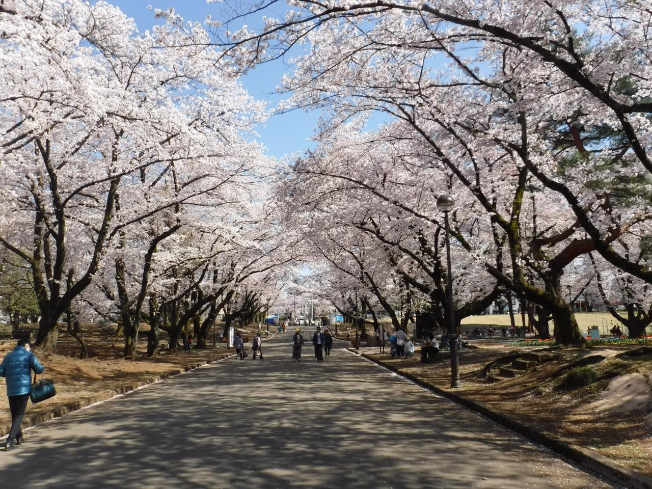 """今年の桜は""""ながら""""に限る。「お花見気分」で行きたい都内カフェ8選"""