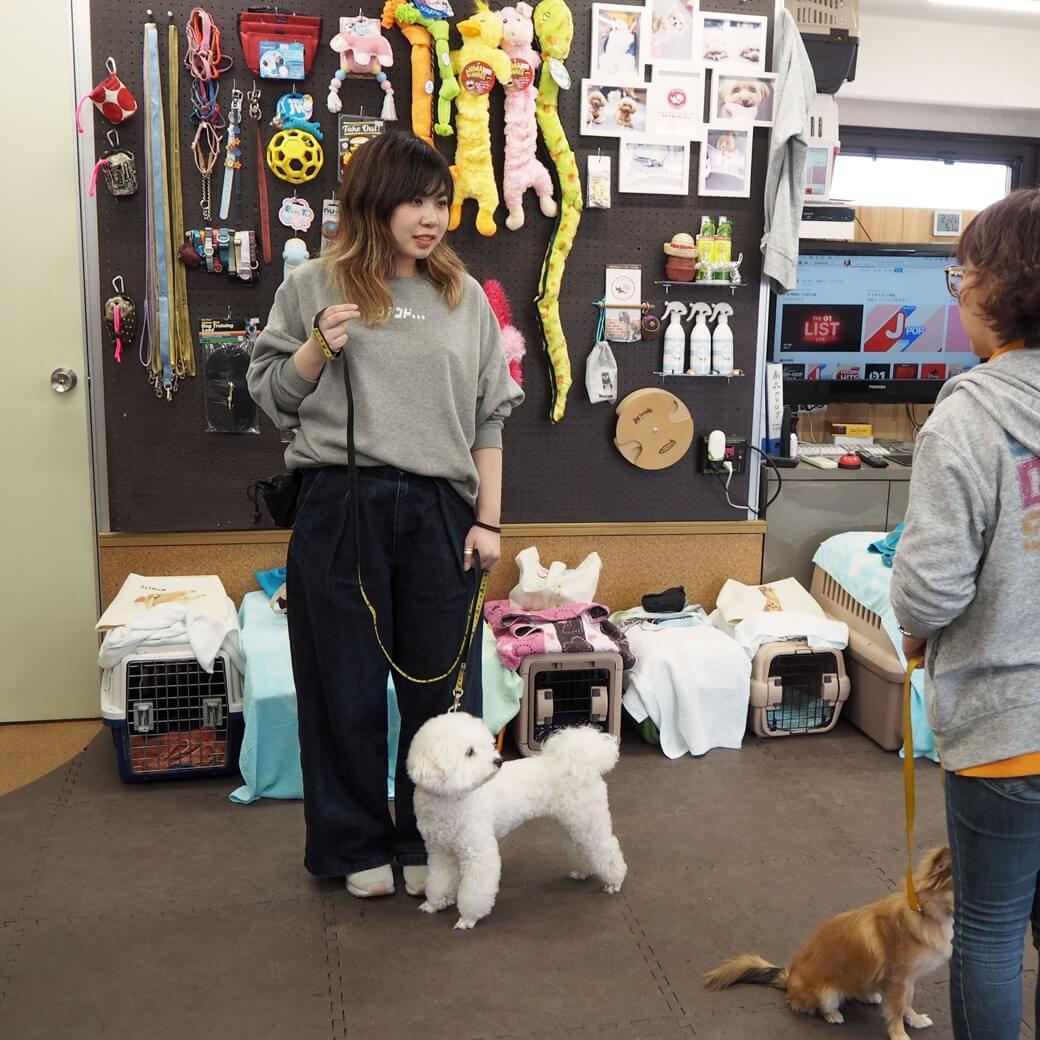 子供の頃の憧れた「犬の保育園の先生」という仕事をやってみた。