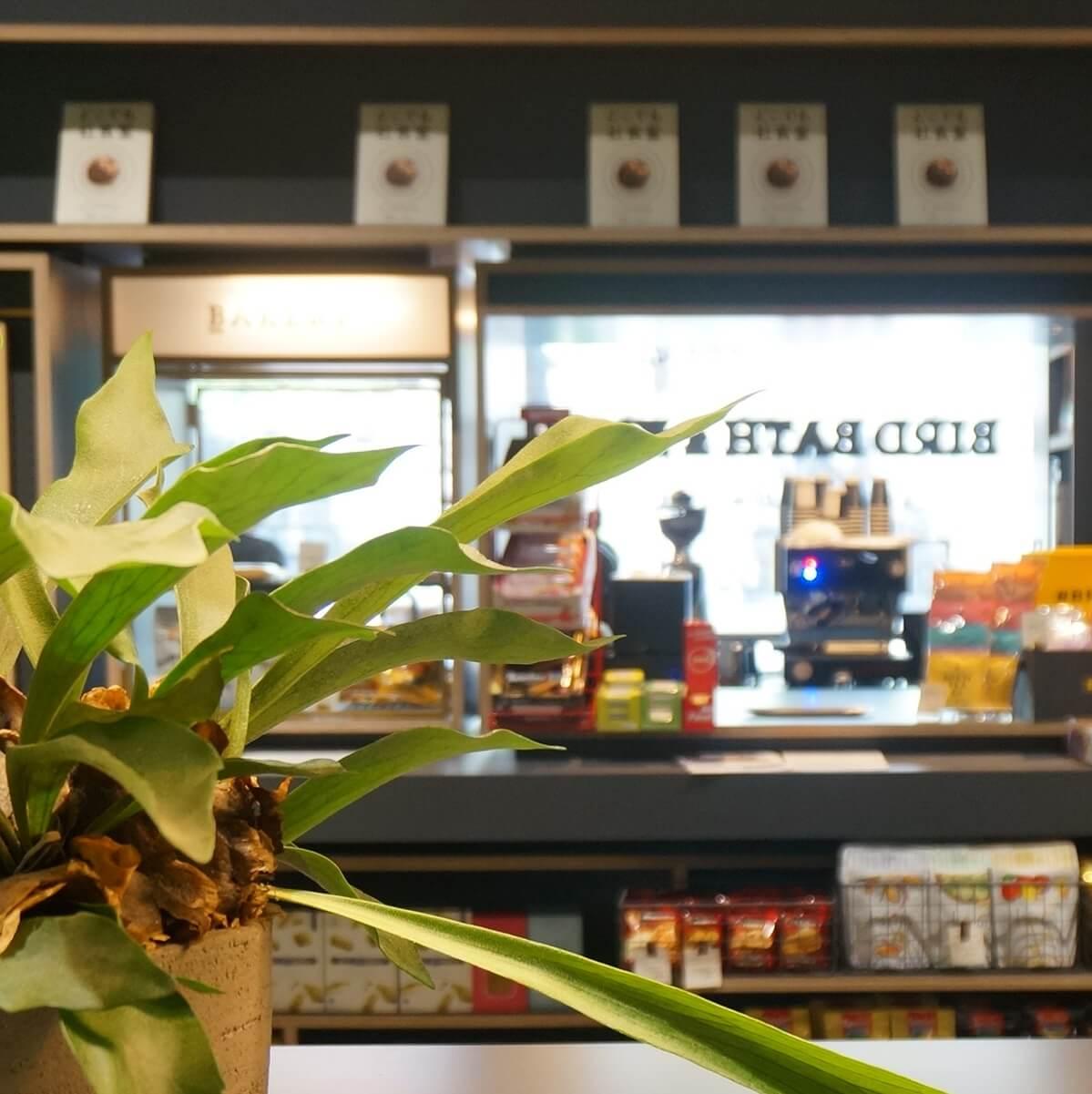 """売店型コーヒースタンド。働くに""""楽しい""""を添える「BIRD BATH&KIOSK」"""