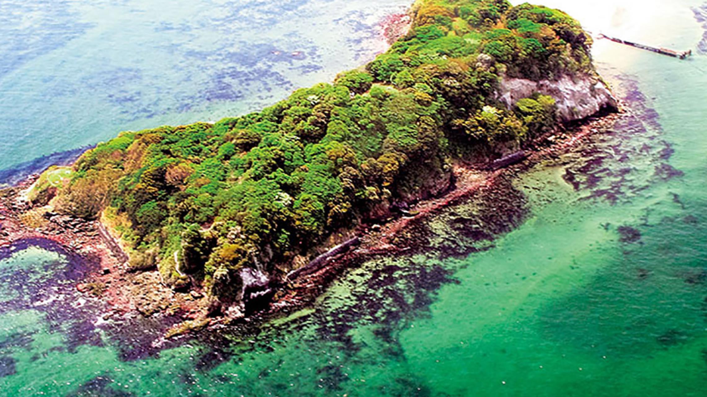 舞台は夜の無人島。猿島の自然とアートが融合したナイトイベント開催