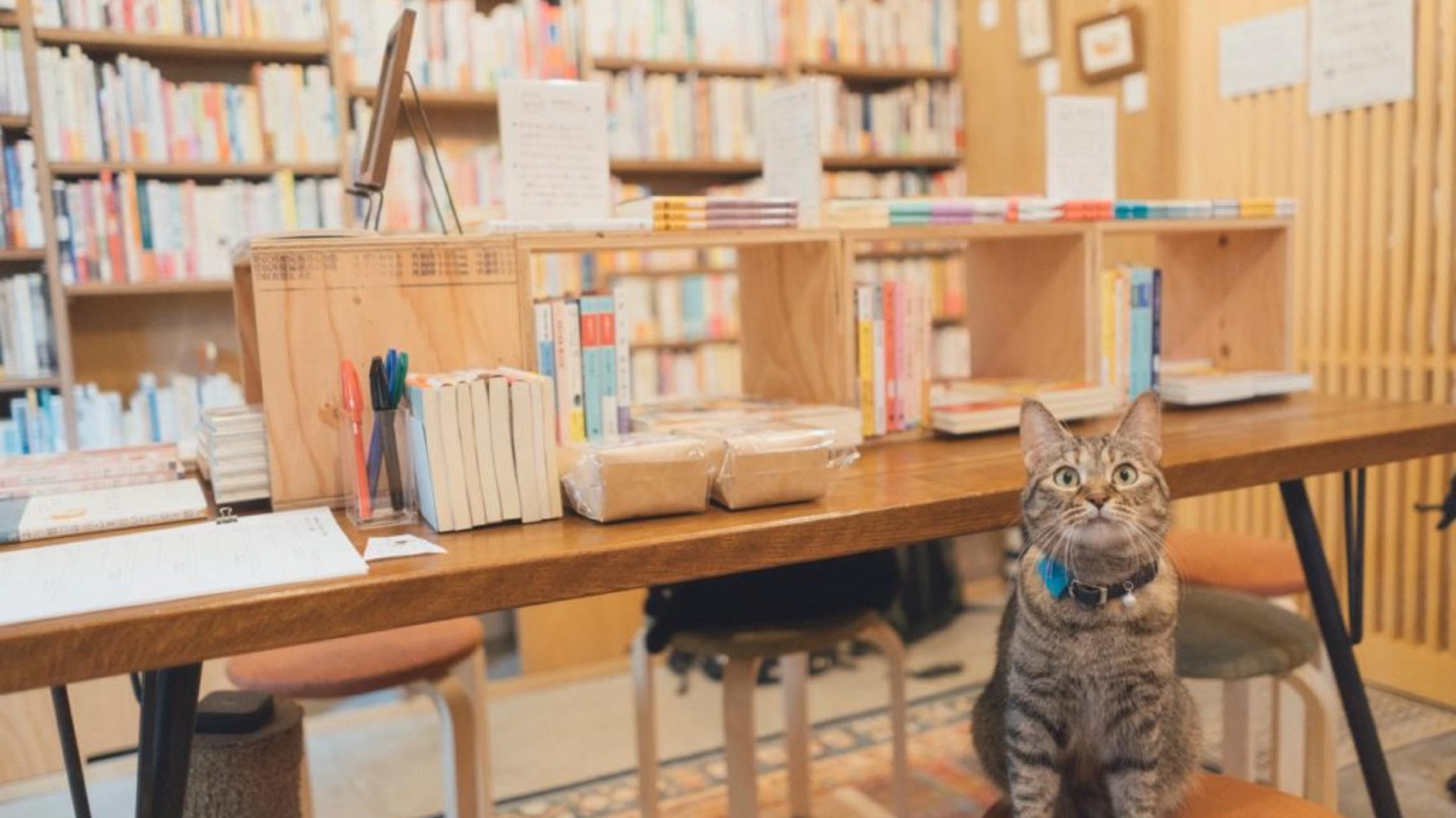 愛ネコ家による愛ネコ家のためのネコの本屋で至福の時を。
