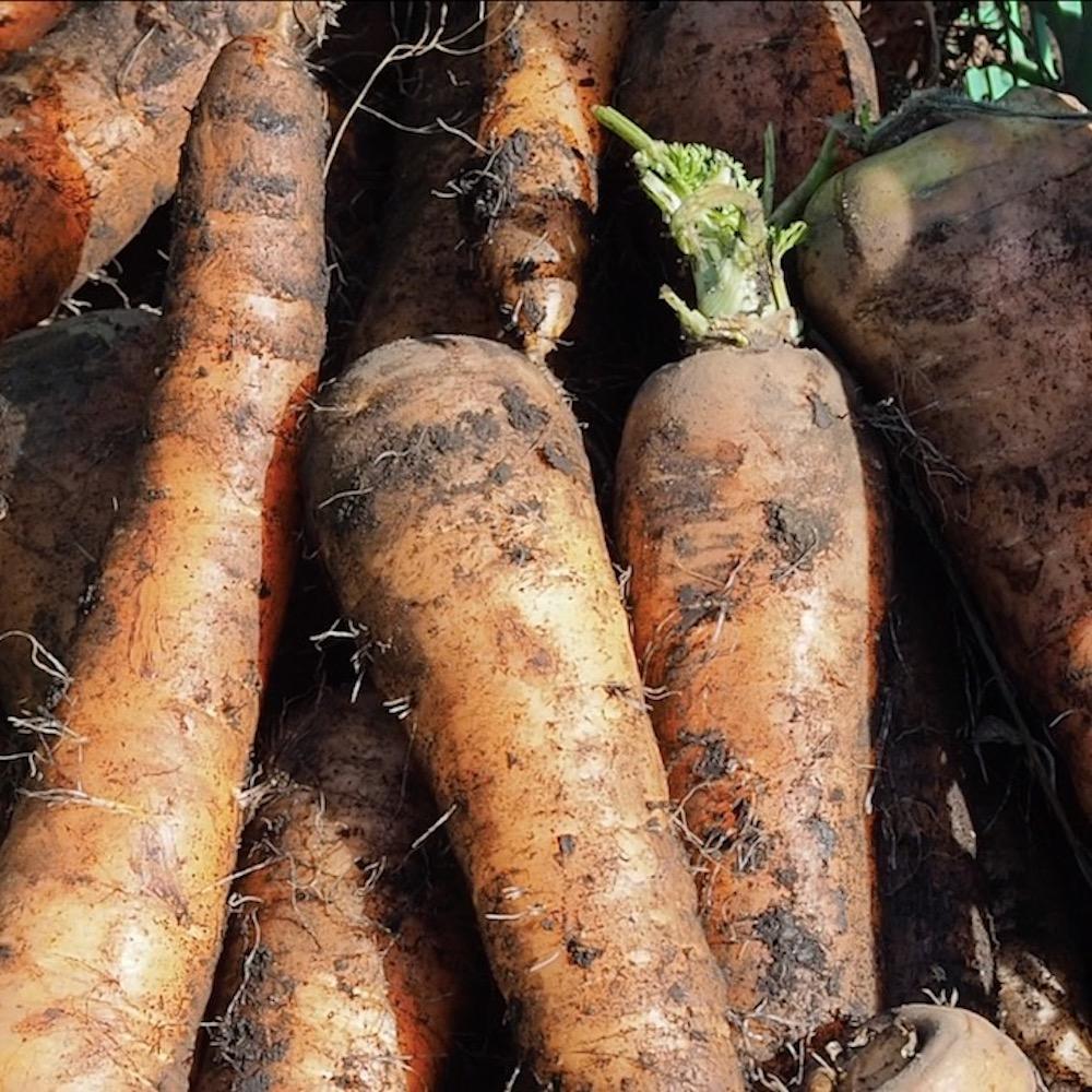 畑の味をテーブルへ。生産者と消費者を繋ぐ食のポータルサイト「GREAT FARMERS TABLE」