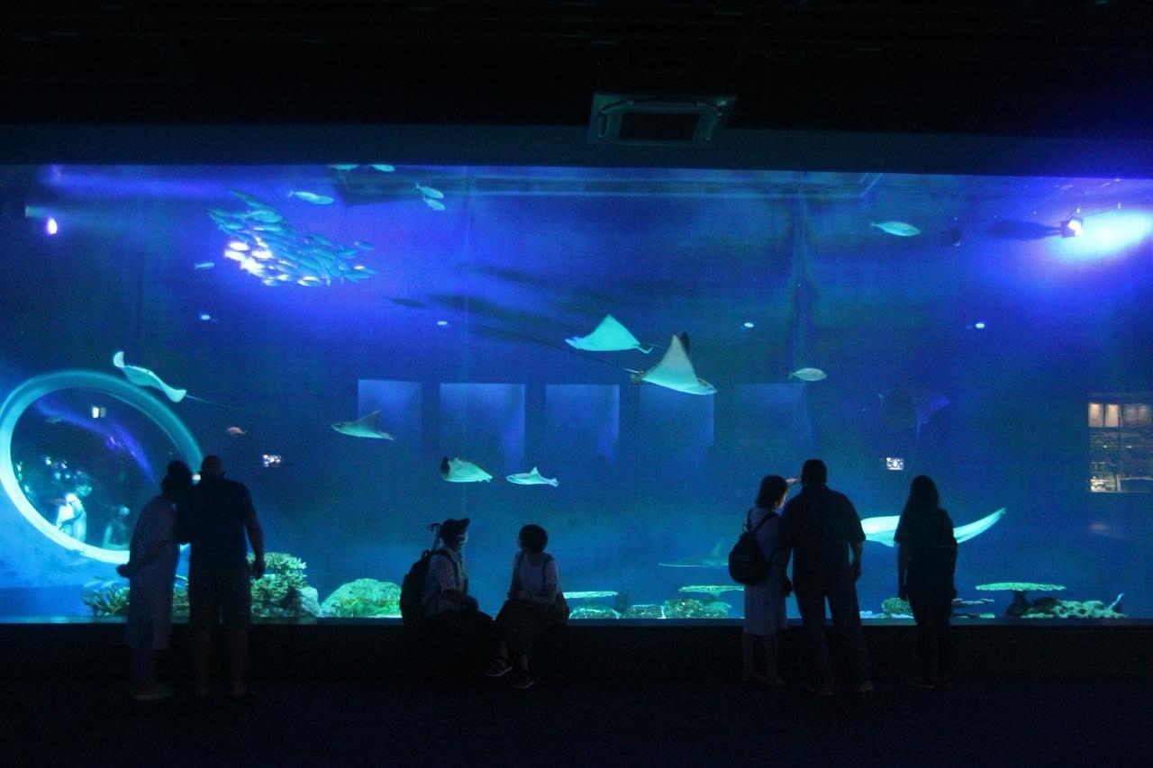火災後の首里城にコロナ渦中で開業した水族館など、最新の沖縄観光スポットをレポート