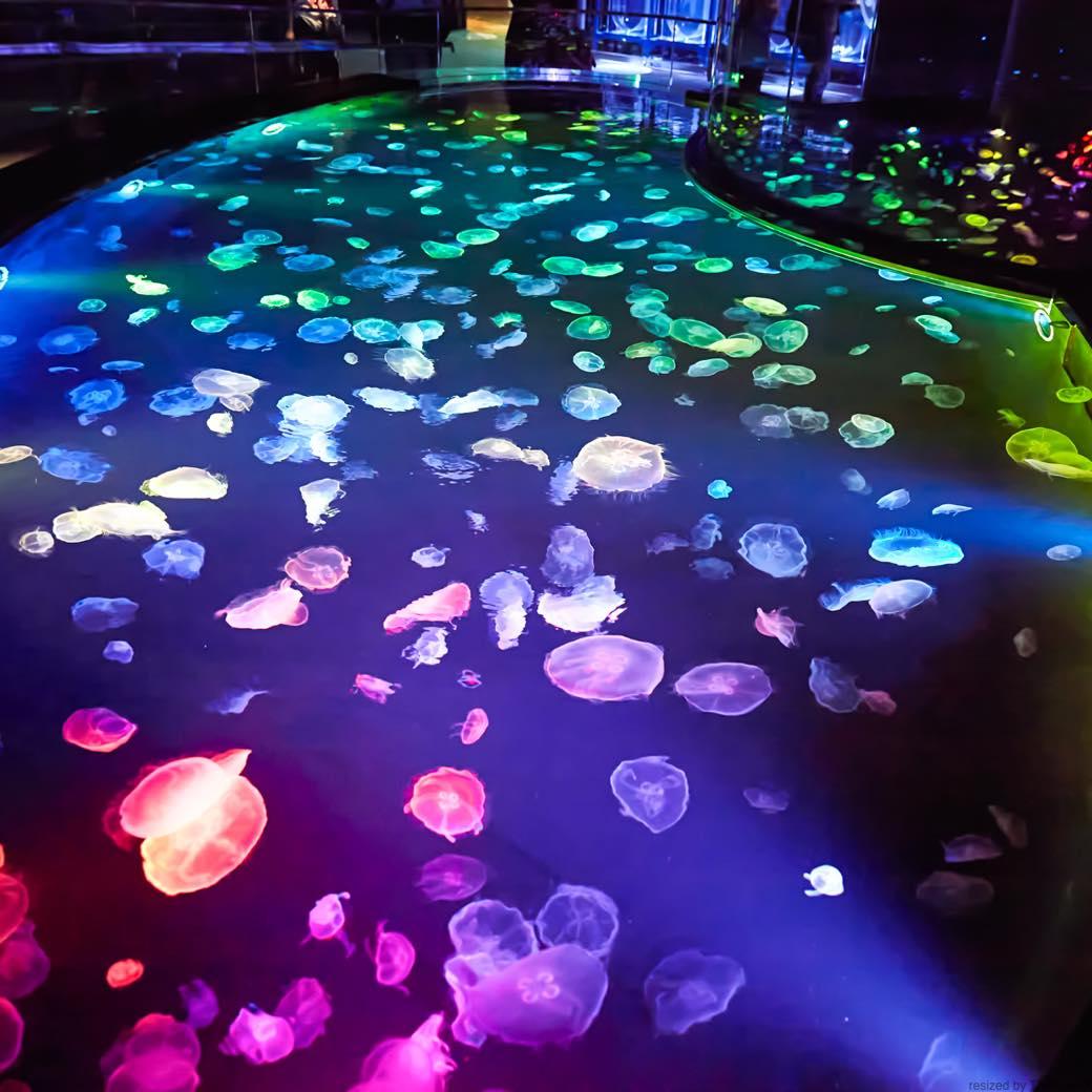目玉は日本最大級のクラゲ水槽。飼育作業を間近で楽しめるライヴ感も注目の新生「すみだ水族館」へ
