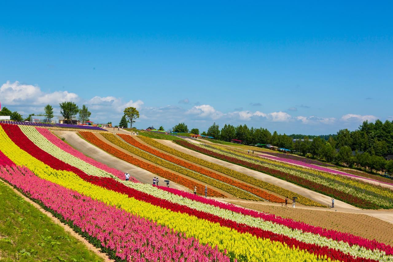 赤れんが庁舎と四季彩の丘。心を癒す北海道の2大スポットの今