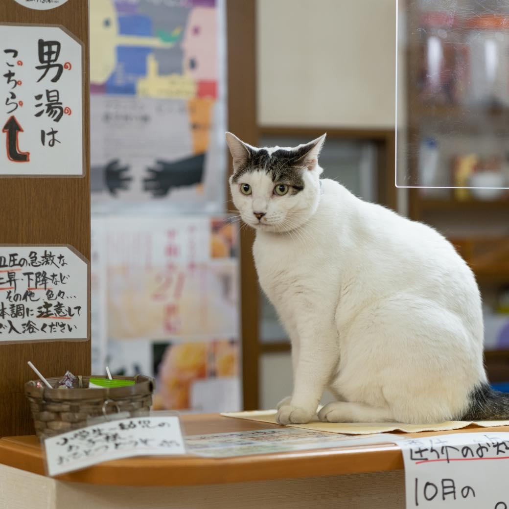 性格は正反対な番頭ネコズ。西荻で愛され続ける銭湯の看板ネコに会いに行く