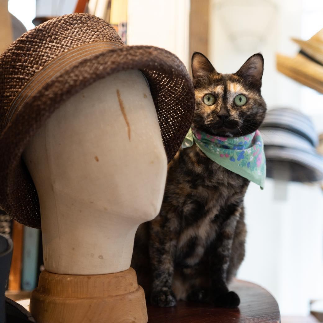 西荻で見つけたモードキャット。オーダーメイド帽子工房の看板ネコに会いに行く