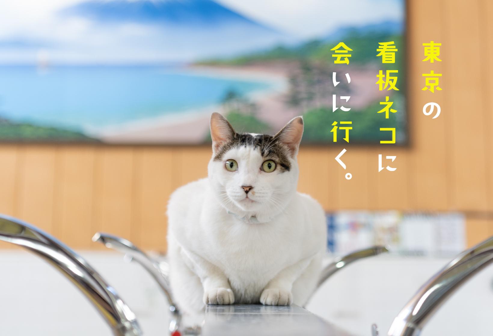 東京の看板ネコに会いに行く。