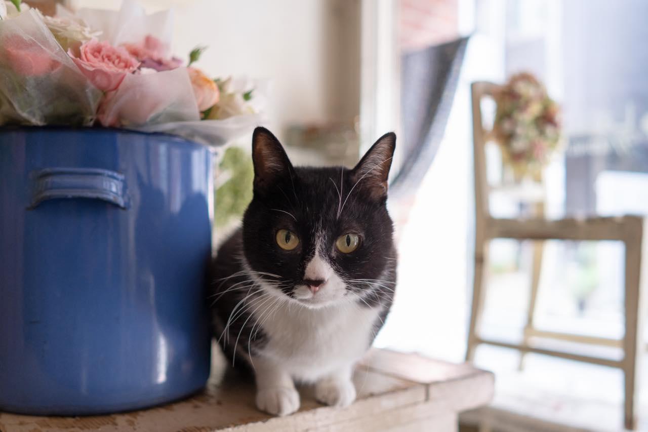 「世界を旅するトラベリンキャット、ときどき西荻」な花屋の看板ネコに会いに行く