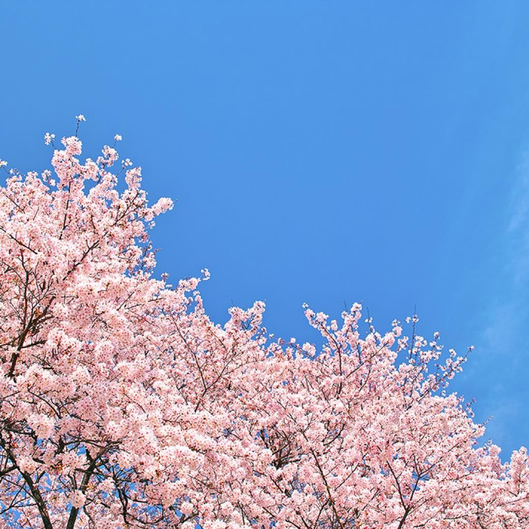 【2021年春】お花見は、カフェついでに。満開間近!おすすめスポット8選