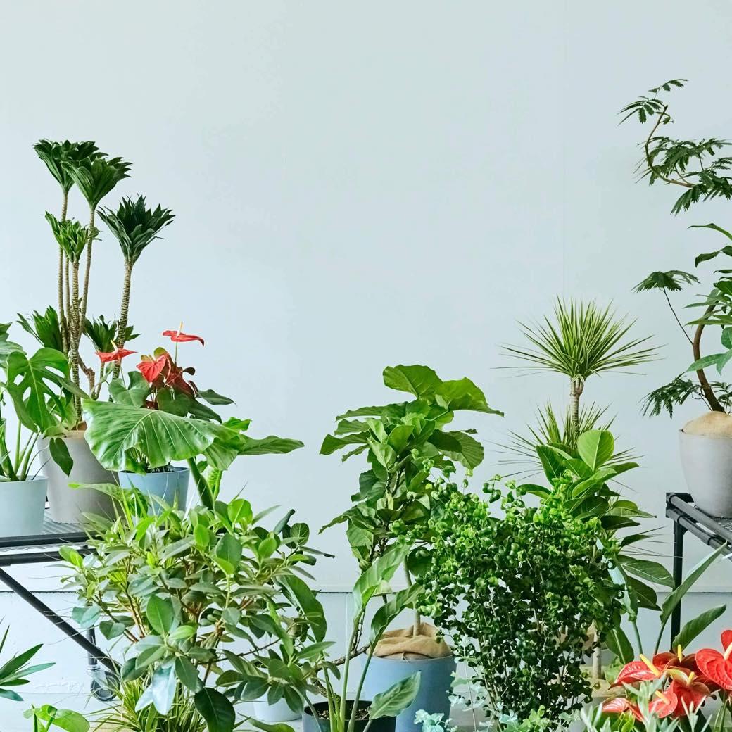 生活スタイルで植物を選ぶ。「AND PLANTS」で自分にぴったりの観葉植物と出会う