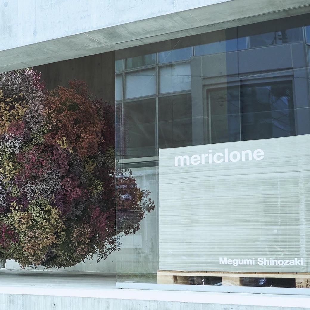 """花を受け取り、アート作品に""""参加""""する。篠崎恵美と考える、花々の未来"""