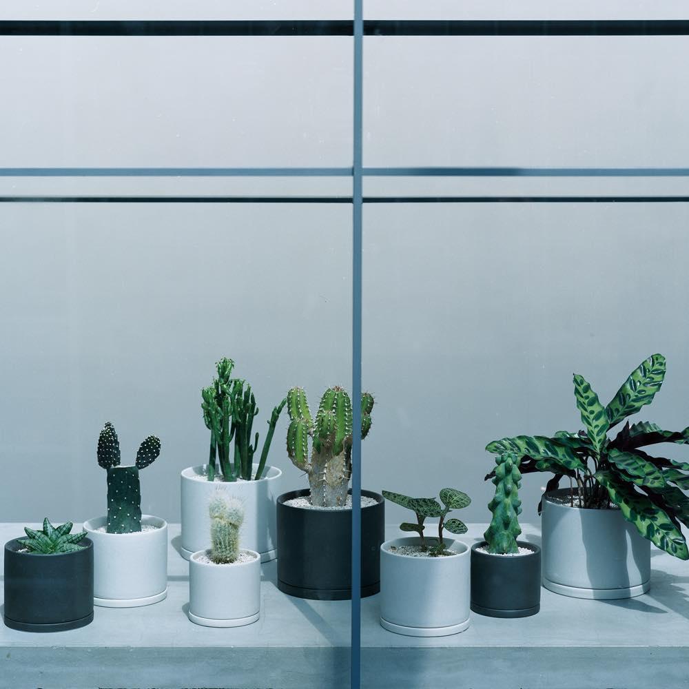 自分の部屋に合う緑の探し方を見つける